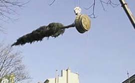Grutage d'un cèdre dans Paris