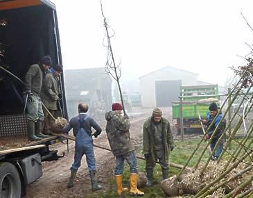 Chargement d'arbres aux Pépinères Thuilleaux