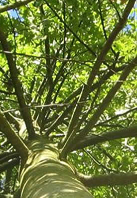 photo caractéristiques physiques arbre