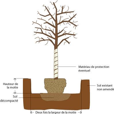 Thuilleaux - Schéma d'une fosse de plantation