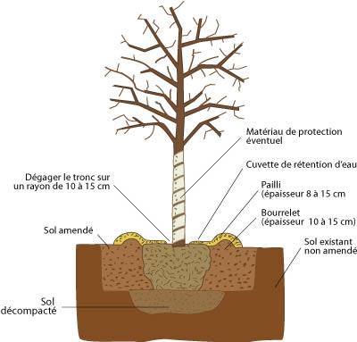 Thuilleaux - Schéma de la plantation d'un arbre