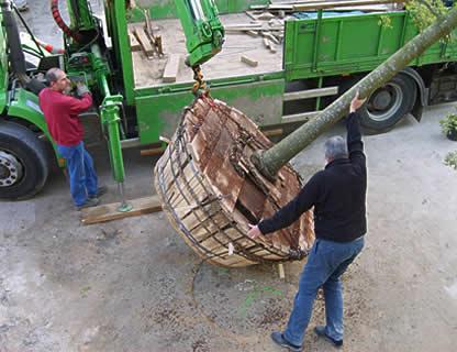 Manipulation de l'arbre