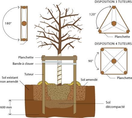Thuilleaux - Schéma des différents types de tuteurage