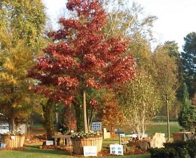 Ruban d'Or aux Journées des Plantes de Chantilly