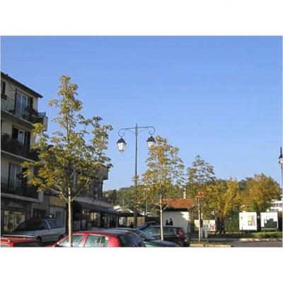 Marronnier - La Celle Saint Cloud - 92- Hauts-de-Seine