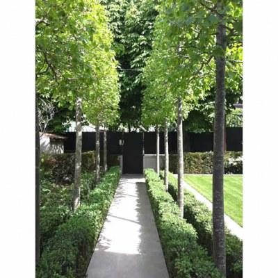 Tilleuls - Jardin de particulier dans Paris  - 75 - Ville de Paris